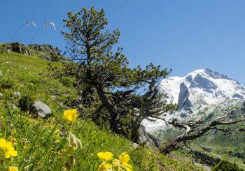 Franse Alpen in de zomer